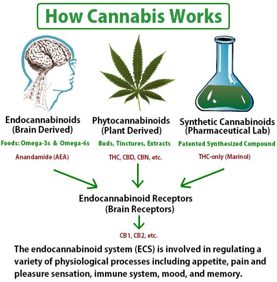 medicinal use of marijuana essay example For example, one study found that state-approved medicinal use of marijuana is a fairly hockenberry j association of medical and adult-use marijuana laws.